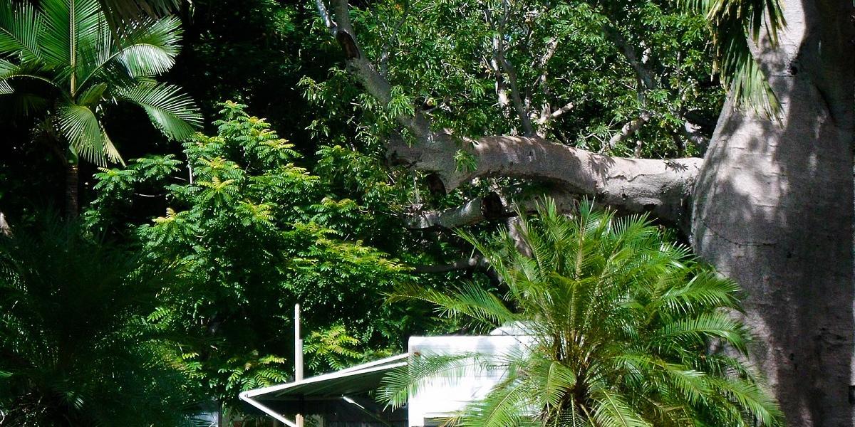 Boab Tree Site