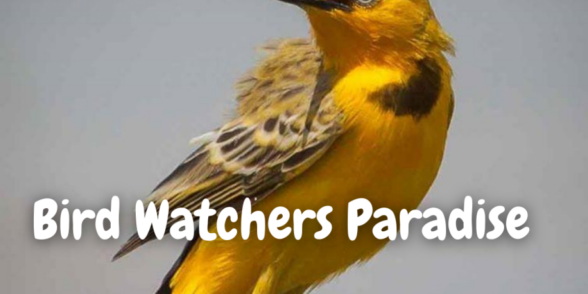 Bird Watching Tours near Kununurra