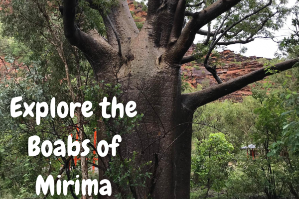 Boabs of Mirima
