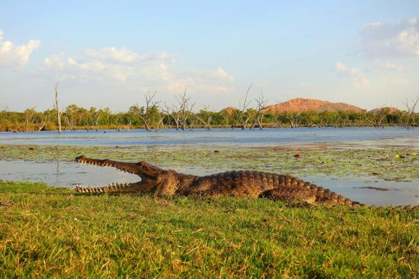 Freshwater Crocodile at Kimberleyland Waterfront Holiday Park