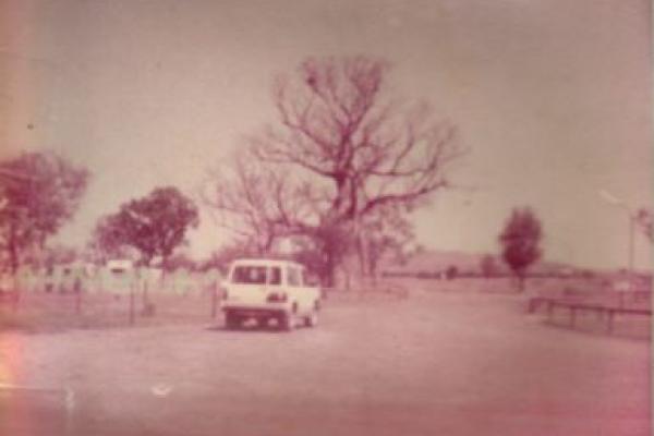 Kimberleyland's 1000 year old boab tree
