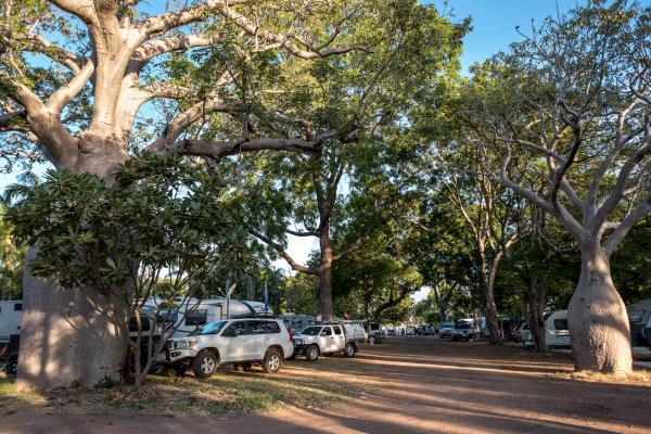 Caravan Sites at Kimberleyland Boab Trees