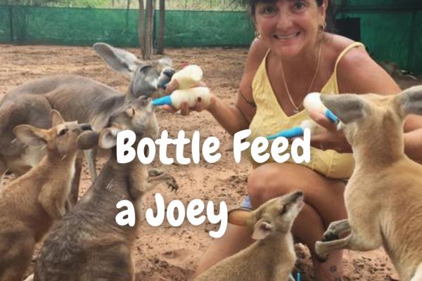 Feed the Joeys in Kununurra