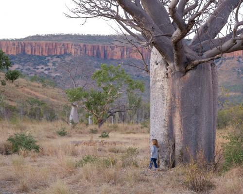 Boab Tree The Kimberley Australia